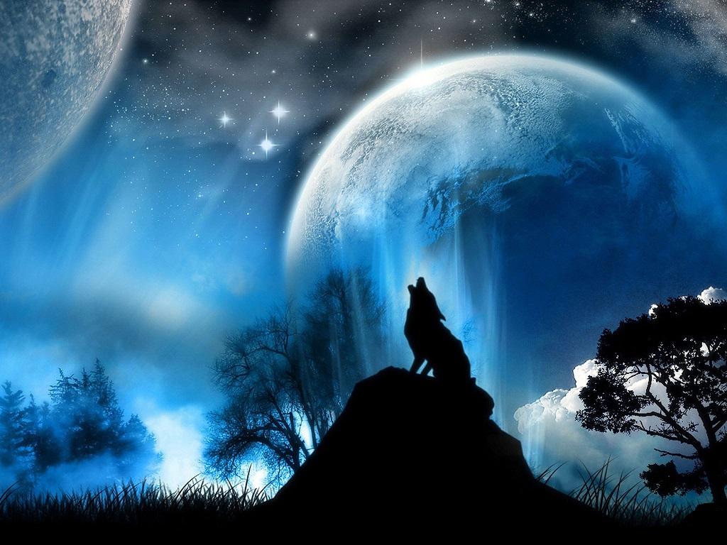 wolf-ursa Index du Forum